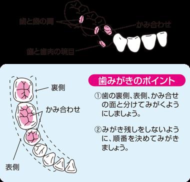 歯みがきのポイント