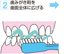 2. 歯みがき剤を歯面全体に広げる